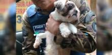 Pet-shop aciona Ministério Público após suspeitar que cliente maltratava cachorro (veja o vídeo)