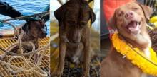 Cachorro é resgatado no mar a 220 km da costa da Tailândia