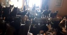 Vizinhos descobrem 300 gatos vivendo em um apartamento de dois quartos