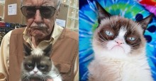 Morre Grumpy Cat aos 7 anos, a gata mais 'simpática' da internet