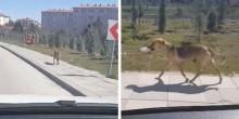 Homem vê cadela levando pote com comida e decide segui-la (veja o vídeo)