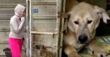 Mulher não consegue decidir qual cão salvar, então resolve comprar o abrigo