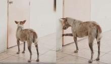 Cão leal espera por semanas por dono e recebe uma triste notícia (veja fotos)