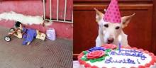 Cão deficiente largado na rua encontra um lar que o amará para sempre