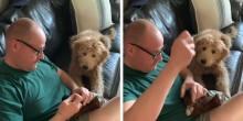Cão, preocupado, acompanha 'cirurgia' em seu ursinho de pelúcia favorito (veja o vídeo)