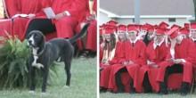 Cão rouba a cena em formatura e arranca risos do público (veja o vídeo)