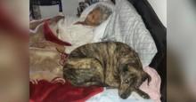 Último desejo de idosa com doença terminal é encontrar lares para seus cães