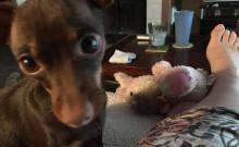 Cão leva seu melhor brinquedo para sua mãe sempre que ela está doente