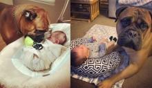 Cachorro traz brinquedo favorito para seu irmão parar de chorar