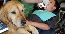 """Dentista """"contrata"""" cachorro para ajudar seus pacientes a relaxar durante procedimentos"""