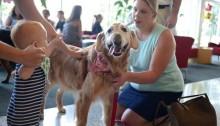 Em evento, cães especiais ensinam crianças que não há problema em ser diferente
