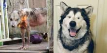 Cão que vivia acorrentado é transformado após receber cuidados e amor
