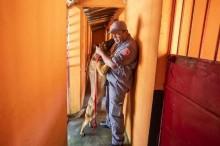 """""""Firmes, destemidos e sem trabalho forçado"""", diz PM sobre cães que ajudaram em Brumadinho"""
