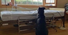 Cachorro segue ao lado de leito hospitalar após dono morrer