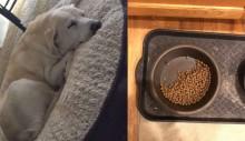 Cãozinho cujo melhor amigo morreu ainda deixa comida para ele todos os dias