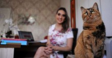 Gatos mudam rotina de trabalho em empresas de Caxias do Sul (RS)