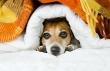 Quais cuidados tomar com cães e gatos neste inverno