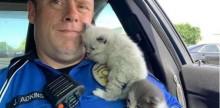 Gatinhos não conseguem parar de afagar policial que salvou suas vidas
