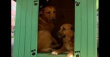 População reclama e condomínio terá de retirar casinhas de cães de calçada em Porto Alegre