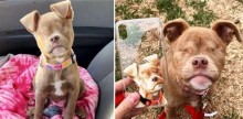 Cachorra perde olhos por negligência, mas ganha o amor de uma família