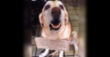 Cão idoso vende brigadeiro para pagar tratamento contra tumores