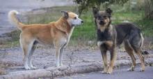 Projeto de Lei propõe instalação de potes de comida para cães de rua em Vitória (ES)