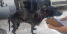 Homem é preso por manter cachorro trancafiado em apartamento em SC