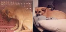 Cachorro abandonado e preso em quarto bebia própria urina e comia madeira para sobreviver