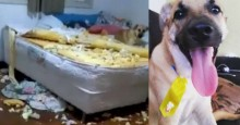 Dona do cão Chico afirma que achava que uma quadrilha tinha entrado no quarto