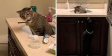 Gato descobre que irá dividir casa com cão - e decide ir 'viver' na pia do banheiro