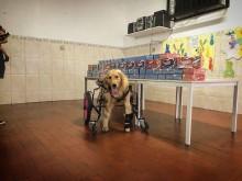 Cadelinha paraplégica leva chocolates para crianças carentes em São Paulo