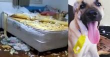 Veterinária dá dicas de como evitar 'síndrome do cão Chico' em pets