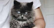 Merlin está conquistando a internet com seus olhos incrivelmente hipnotizantes