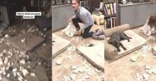 Cachorrinho se inspira em Chico e destrói sala de casa de atriz famosa
