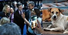 Senado aprova projeto que reconhece animais como sujeitos de direitos