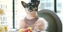 Site brasileiro procura cachorro para ser crítico de hotéis - entenda