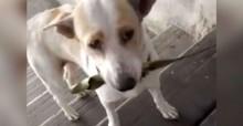 """Cãozinho sempre traz """"presentes"""" à mulher que lhe dá comida todos os dias (veja o vídeo)"""