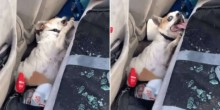 Policial grava vídeo dramático de resgate de cachorro esquecido dentro de carro