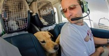 Militar viaja de avião para salvar animais da eutanásia