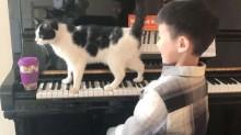 Gato impede que pessoas toquem piano sem antes dar atenção para ele (veja o vídeo)