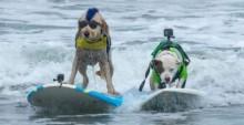 Cachorros participam de campeonato mundial de surf e os vídeos são muito ITI MALIAS