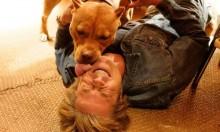 Conheça Brandy, a pitbull que brilha no novo filme de Quentin Tarantino