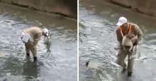 Cachorro é salvo por guarda municipal dentro do Rio Maracanã, no RJ