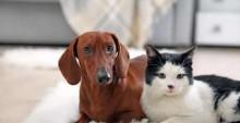 Ex-marido pagará pensão para gatos e cachorro após fim do casamento