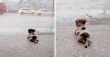 Cachorrinho é flagrado 'contemplando' chuva e cena viraliza nas redes sociais (veja o vídeo)