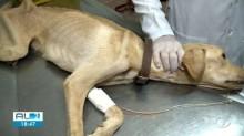 Cães com sinais gravíssimos de maus tratos são resgatados em Maceió