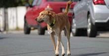 """Conheça Berlim, o cachorro espertinho e amado que ''furta"""" pet shops em SC (veja o vídeo)"""