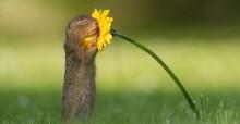 Fotógrafo captura momento em que esquilo cheira florzinha e imagem viraliza (veja fotos)