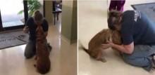 Cachorrinha faz cirurgia para restaurar visão e se emociona ao ver sua dona pela 1ª vez