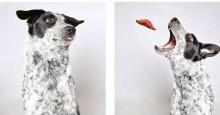 Abrigo faz ensaio de fotos hilário para promover adoção de cachorros
